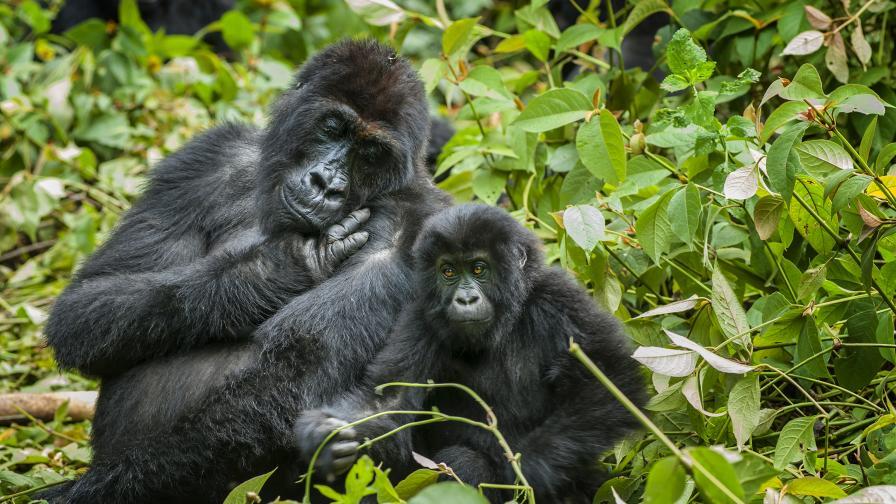 Тези животни обитават Земята по-дълго от...
