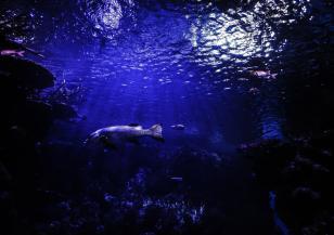 Батискаф се потопи до дъното на Марианската падина