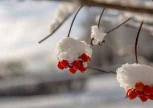 Зимата напомня за себе си в следващите дни