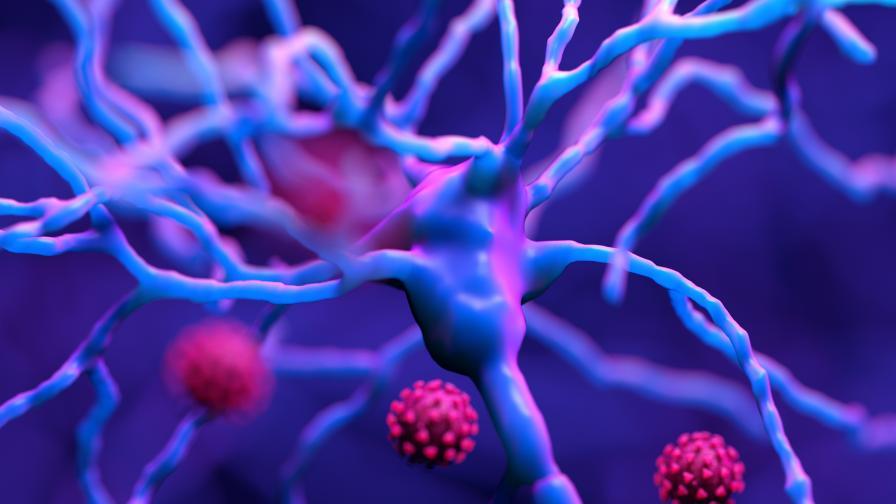 Как коронавирусът прониква в мозъка