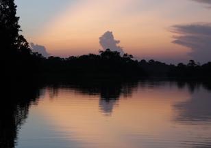 За 12 г. бразилска Амазония е обезлесена рекордно