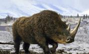 Вадят цял гигантски вълнест носорог от леда в Сибир