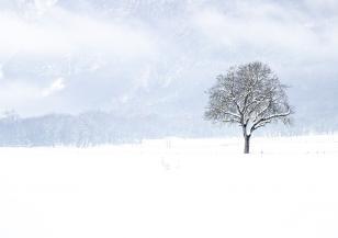 30 см снежна покривка в Турция
