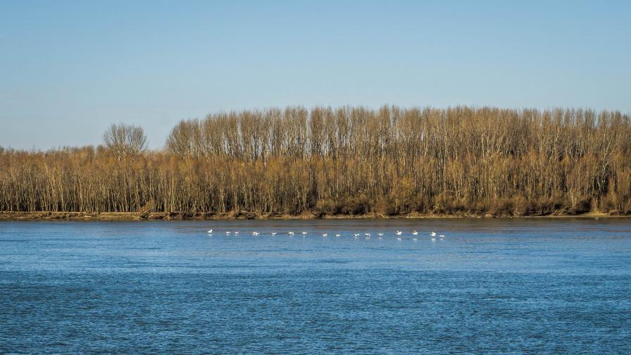 Нивото на р. Дунав се покачва, има ли опасност от заливане