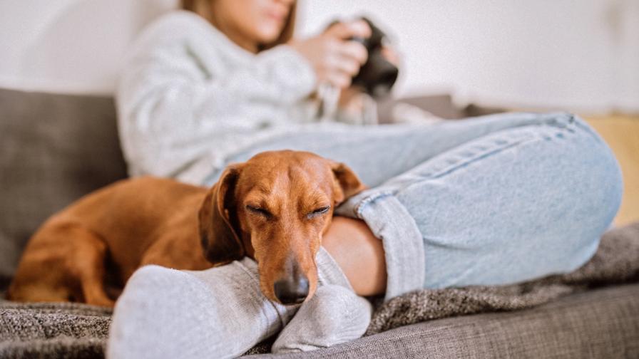 Тази порода кучета са най-добрите домашни любимци