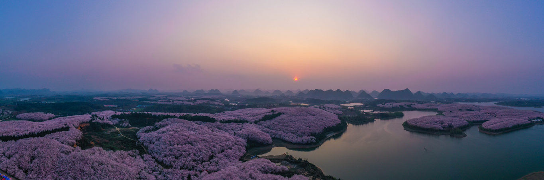 <p>Черешови цветове в окръг Гуайан, провинция Гуйджоу в югозападната част на Китай</p>