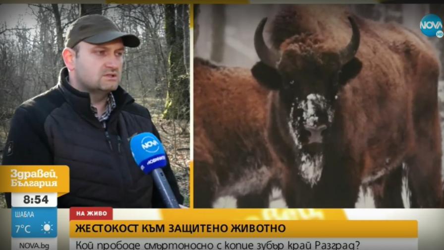 Убиха с копия зубър край Разград, направиха суджуци