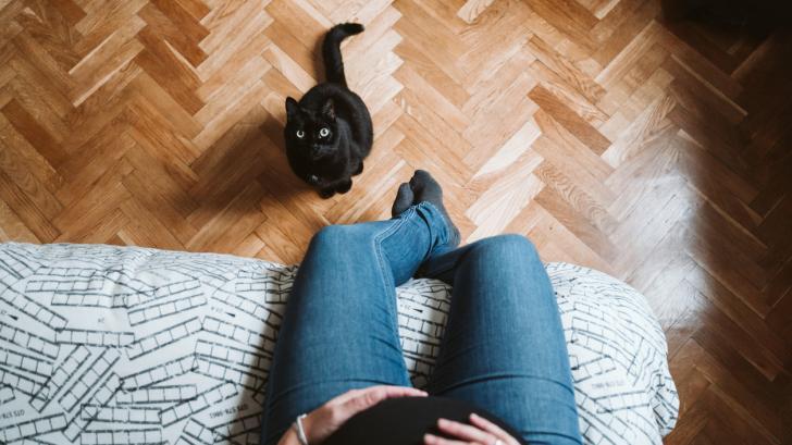 Трябва ли да се разделя с домашната си котка, когато разбера, че съм бременна?