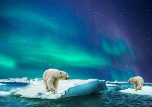 Глобалното затопляне обрича на глад белите мечки