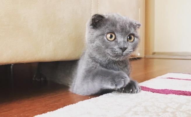 <p>Ако котката ви не ви посреща, когато се приберете вкъщи, а продължава да прави това, с което е заета в момента, сякаш нищо не се е случило.&nbsp;</p>