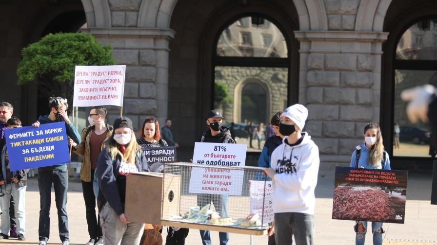 Протест срещу фермите за норки
