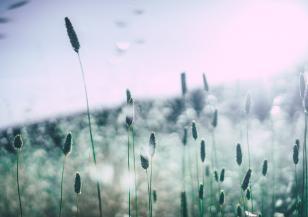 Как да различим симптомите на сенна хрема и COVID-19