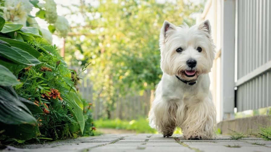 Идеалната порода кучета според зодията ти