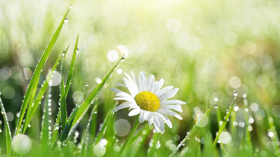 <p>Новата седмица започва със слънце, кога ще вали</p>