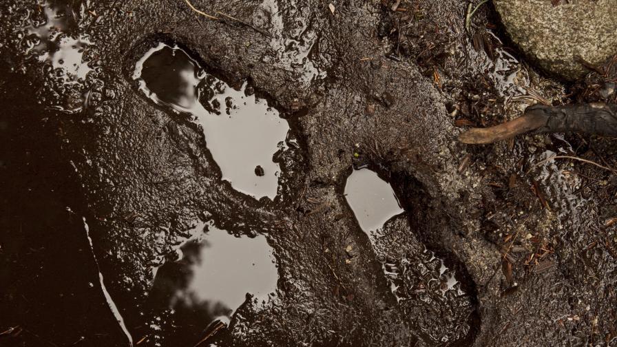 Кал от водни басейни разкрива човешкото въздействие върху Земята