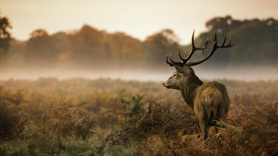 Плашещо, коронавирусът е заразил 40% от елените в САЩ