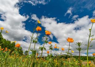 Любопитни факти за лятното слънцестоене