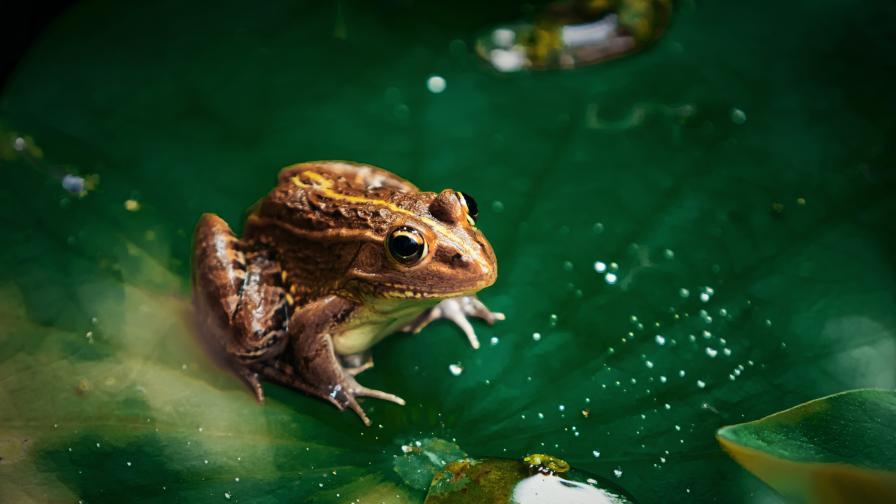Учен говори за жабите и се страхува от мълчанието им (ВИДЕО)
