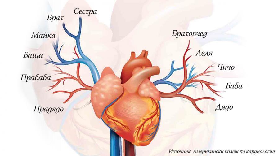 Холестеролът и истината, за която оставаме глухи и слепи