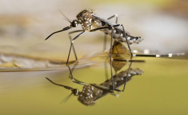 Комарите стават по-опасни