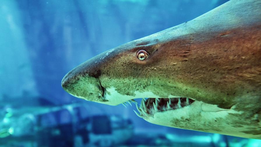 Зъб на акула разкри мистерия за климата на Земята