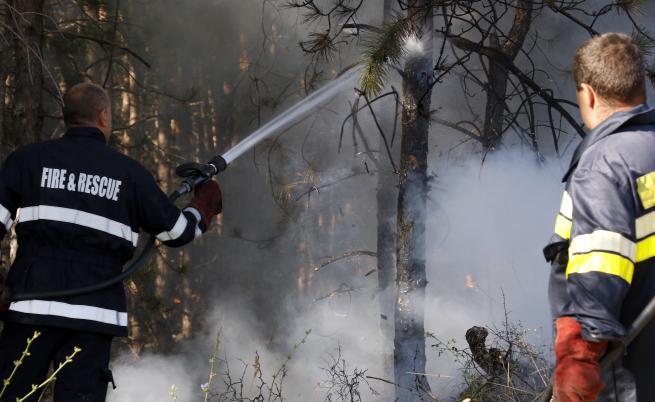 Овладян е горският пожар в Сакар планина