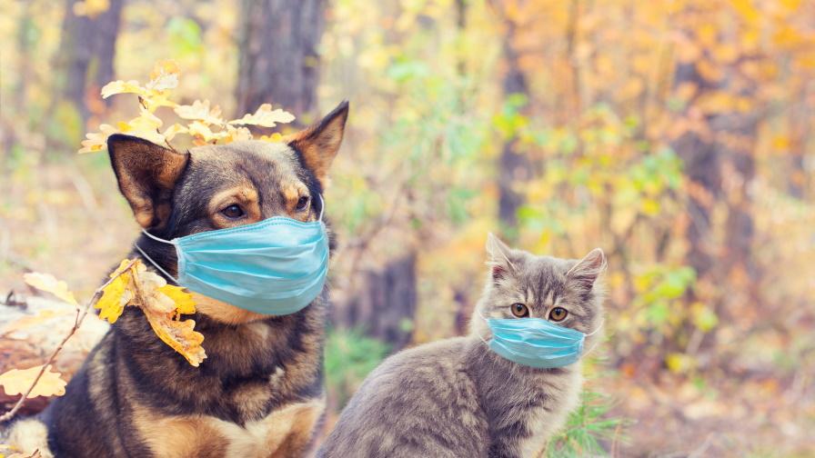 COVID-19: Ето кои животни са най-уязвими