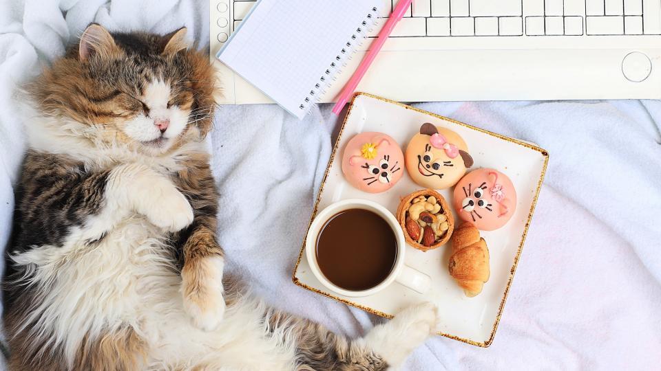 котка кафе дневен