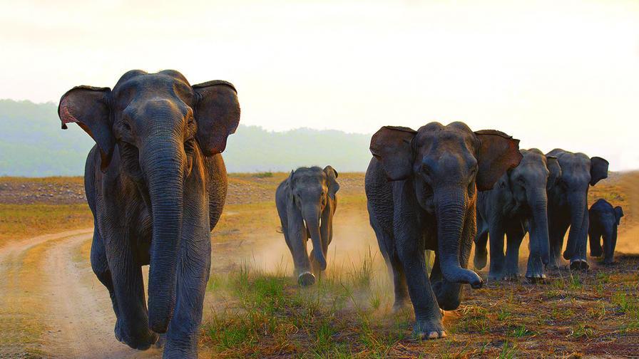 Екологично бедствие: Слоновете в Индия намаляват стремглаво