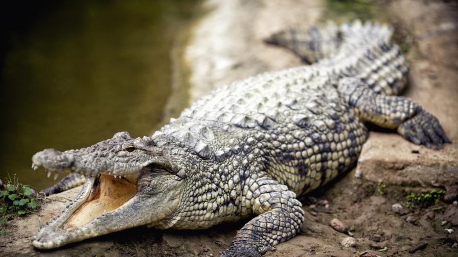 Виновна ли е Етиопия за крокодилите в Хартум