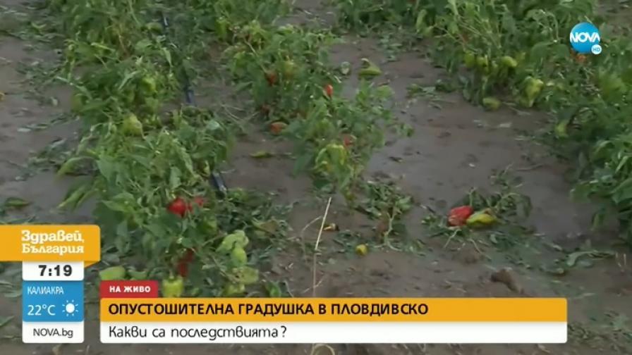 <p>Обещаха обезщетения на земеделците в Пловдивско&nbsp;</p>