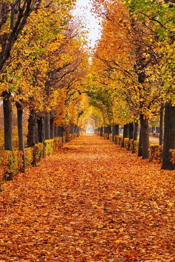 <p><strong>Красотата на есента</strong></p>  <p>Никой не може да те накара да отстъпиш от мястото си. Живееш&nbsp;така, че да не съжаляваш за нито едно свое решение. Трудно създаваш приятелства, но веднъж щом човек влезе в живота ти, той получава един надежден&nbsp;и лоялен съюзник.</p>  <p>Научи се да откриваш красотата и смисъла и в малките неща от ежедневието. Така скоро ще&nbsp;откриеш&nbsp;нещо много специално - през цялото това време то е било точно под носа ти, но прекомерната амбиция и мисли за бъдещето са ти пречили&nbsp;да го видиш и оцениш.&nbsp;</p>