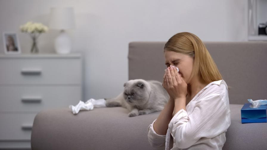 <p>Домашен любимец без алергии? Възможно е</p>