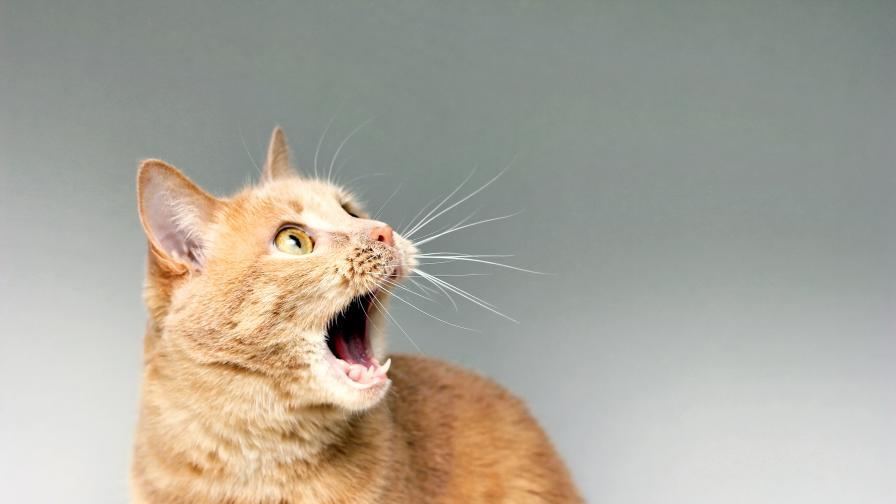 Най-странното нещо, от което се плашат котките