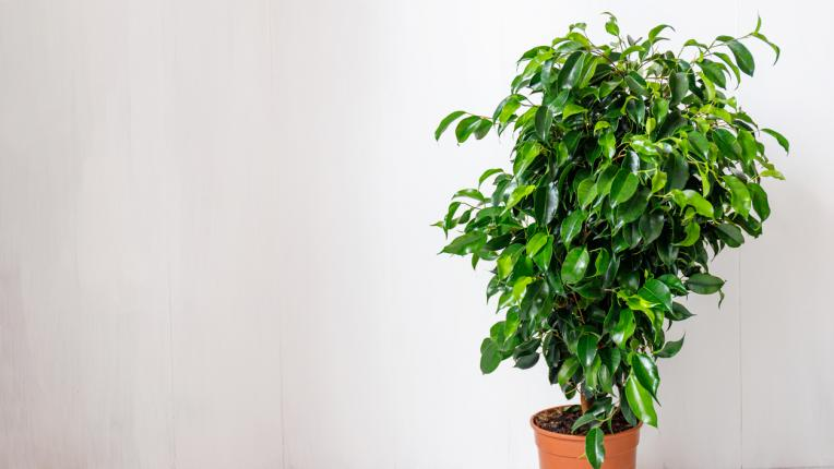 Веднага изхвърлете тези шест растения от дома си