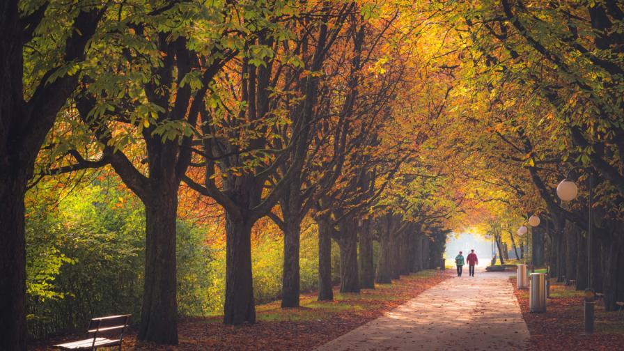 есен двойка парк възрастни хора