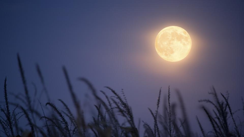 пълнолуние жътварска луна