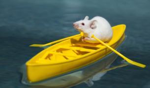 <p>Мишките, които имат собствени къщи, поща и дори плаж</p>