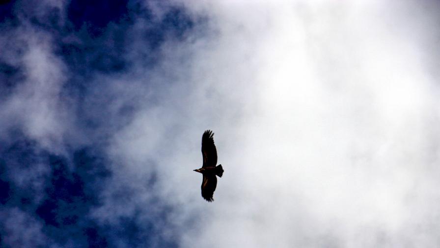 <p>Смъртоносният мах на криле</p>
