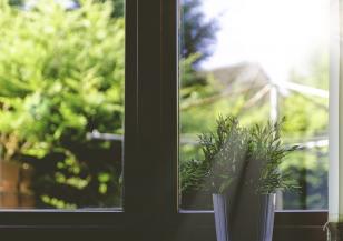 Кои растения е опасно да отглеждате вкъщи