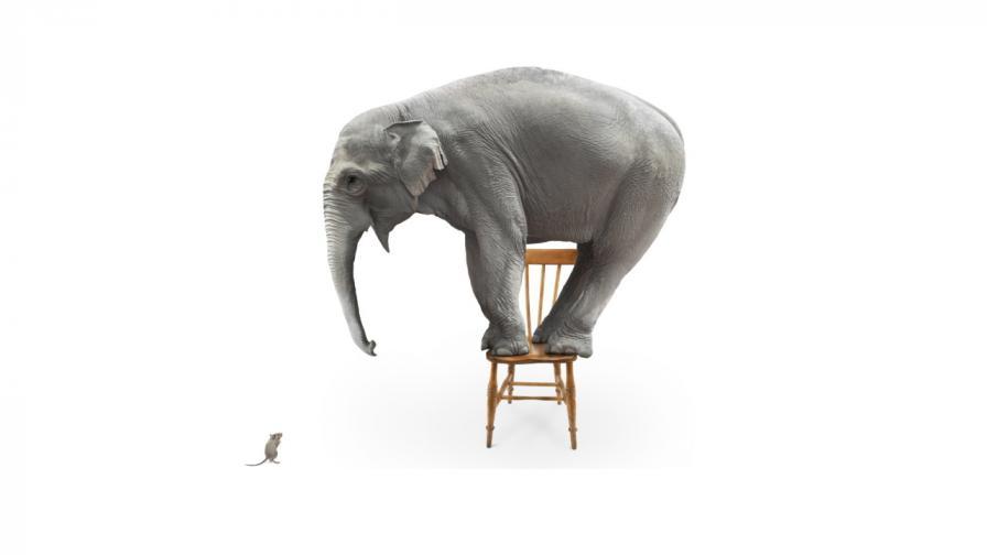 <p>Вярно ли е, че слоновете се страхуват от мишки</p>