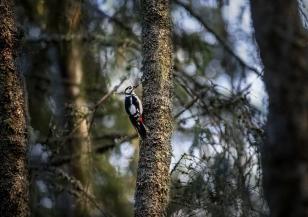Защитени, но твърде късно: САЩ обявяват над 23 вида изчезнали