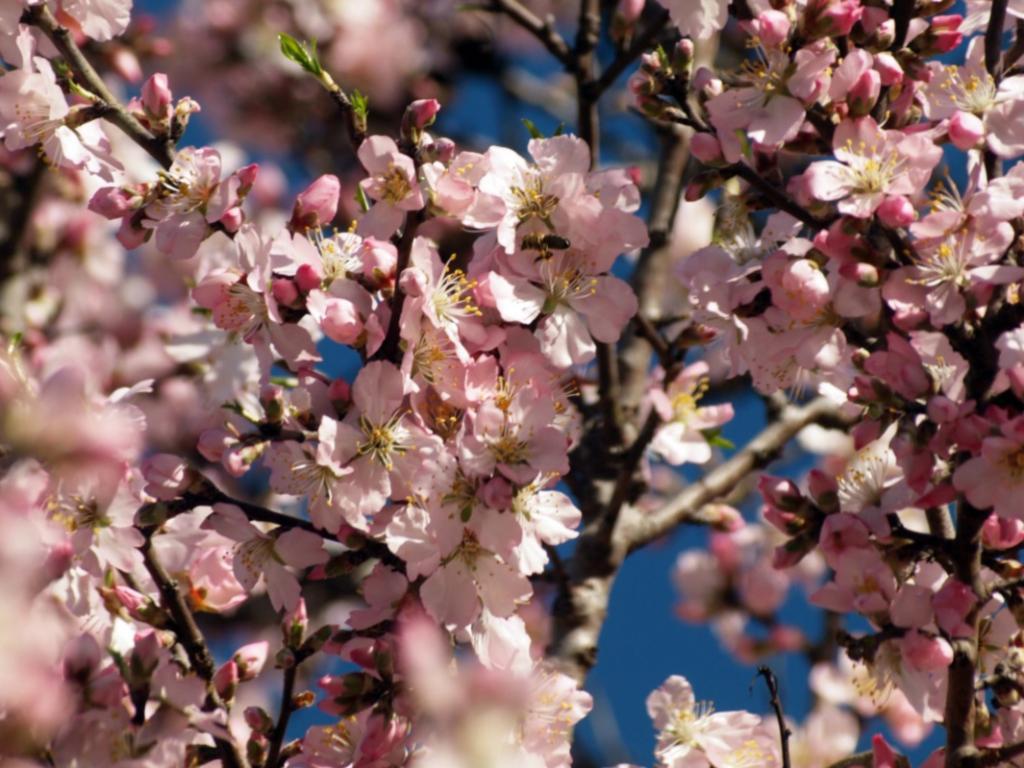 Пролетта дойде със слънце