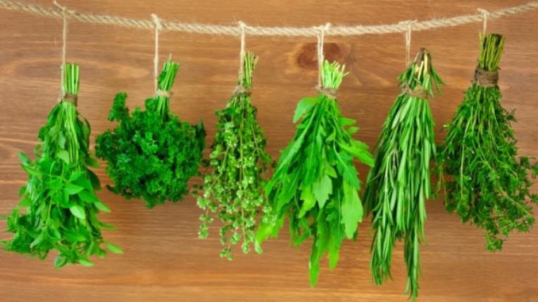 билки разсад саксия подправки лечебни свойства кулинария градина пръст био