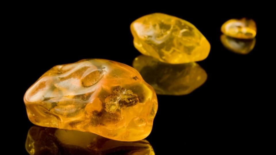Най-старият кехлибар е на повече от 120 млн. години