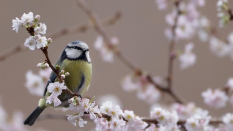 сенна хрема алергия полени