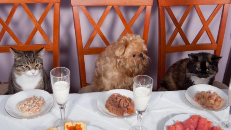 котка куче домашни любимци