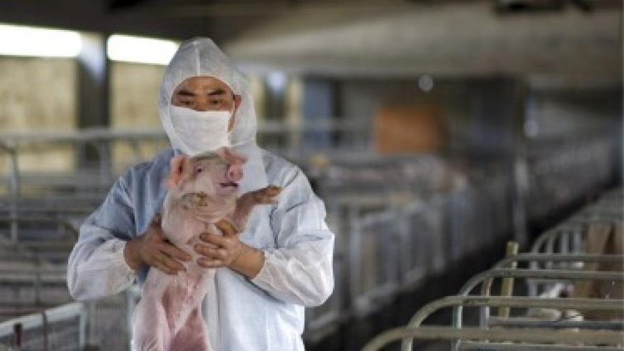 СЗО: Няма доказателства грипът да е създаден в лаборатория