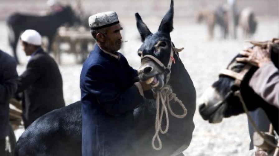 3000 магарета доставят бюлетини в Афганистан