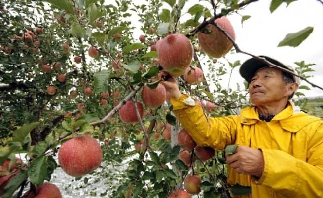 Една ябълка на ден...